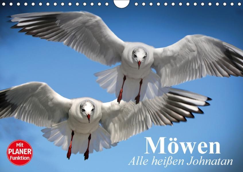 Möwen. Alle heißen Johnatan (Wandkalender 2017 DIN A4 quer) - Coverbild