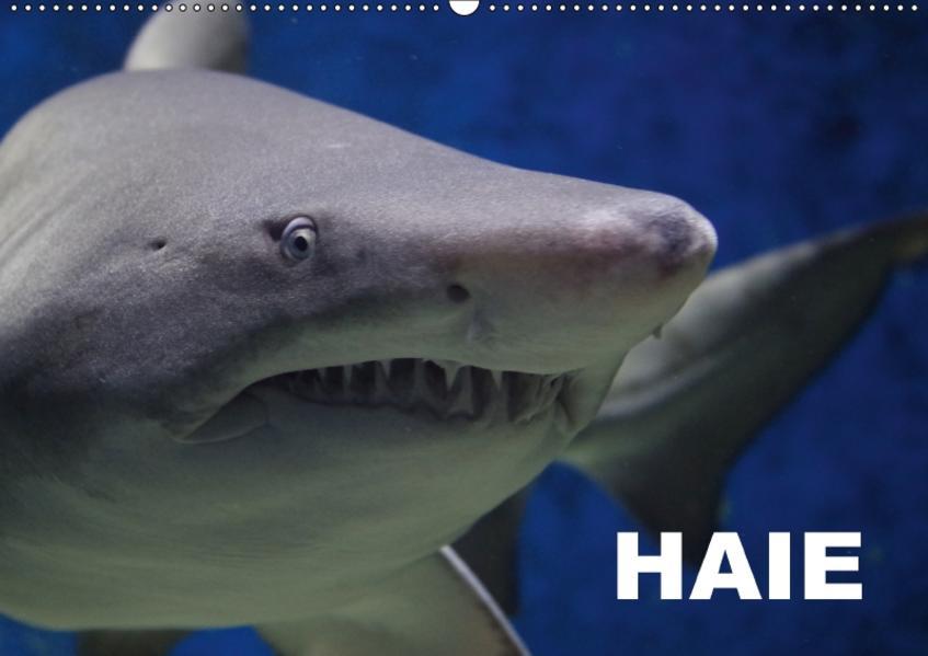 Haie (Wandkalender 2017 DIN A2 quer) - Coverbild