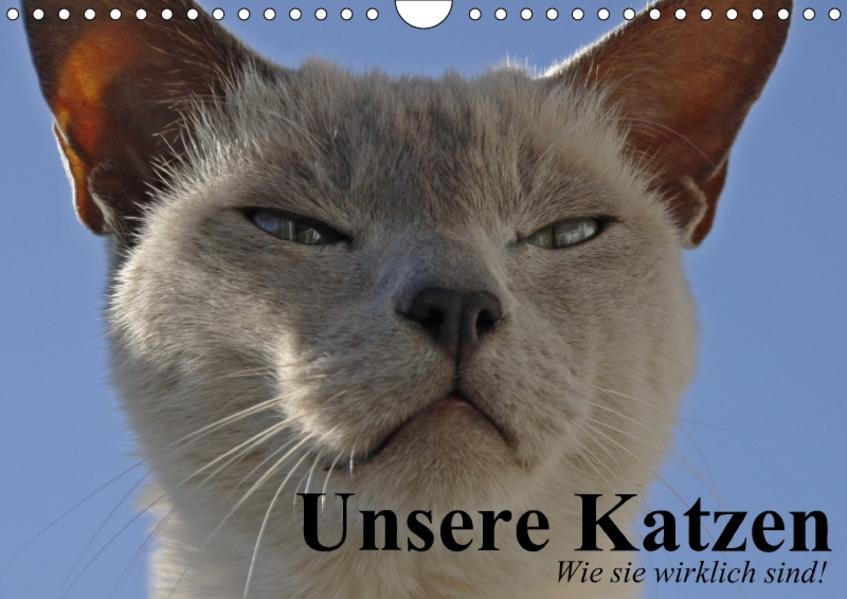 Unsere Katzen. Wie sie wirklich sind! (Wandkalender 2017 DIN A4 quer) - Coverbild