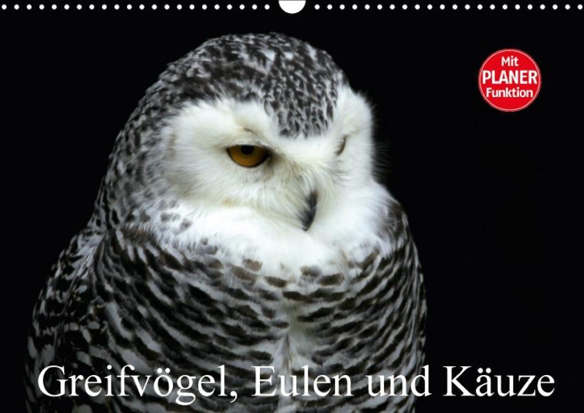 Greifvögel, Eulen und Käuze (Wandkalender 2017 DIN A3 quer) - Coverbild