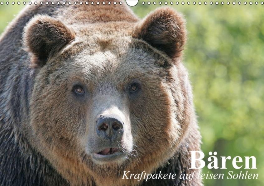 Bären. Kraftpakete auf leisen Sohlen (Wandkalender 2017 DIN A3 quer) - Coverbild