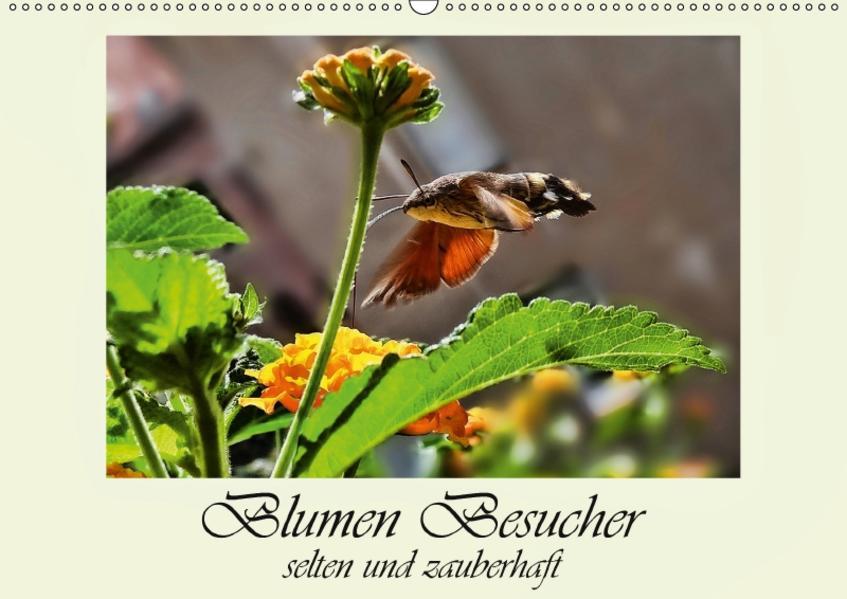 Blumen-Besucher - selten und zauberhaft (Wandkalender 2017 DIN A2 quer) - Coverbild