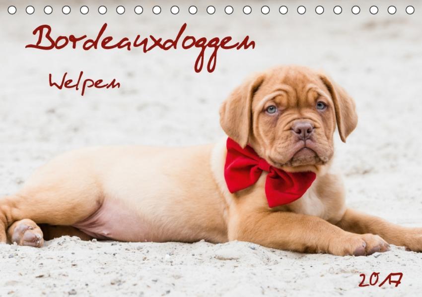 Bordeauxdoggen Welpen (Tischkalender 2017 DIN A5 quer) - Coverbild