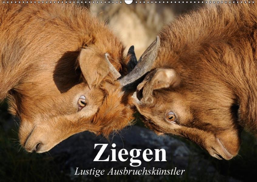 Ziegen. Lustige Ausbruchskünstler (Wandkalender 2017 DIN A2 quer) - Coverbild