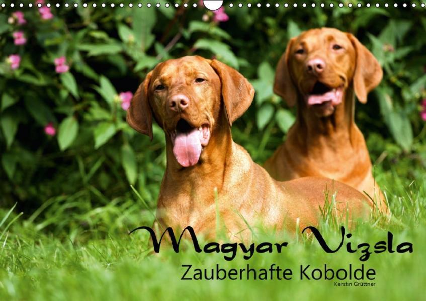 Magyar Vizsla - Zauberhafte Kobolde (Wandkalender 2017 DIN A3 quer) - Coverbild