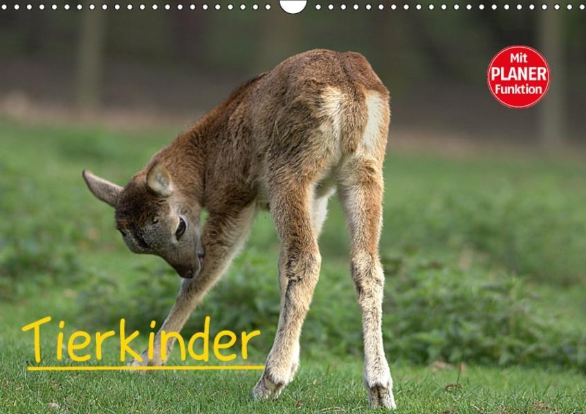 Tierkinder (Wandkalender 2017 DIN A3 quer) - Coverbild