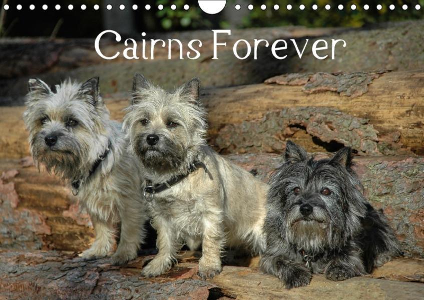 Cairns Forever (Wandkalender 2017 DIN A4 quer) - Coverbild
