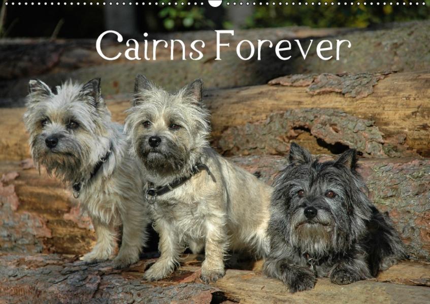 Cairns Forever (Wandkalender 2017 DIN A2 quer) - Coverbild