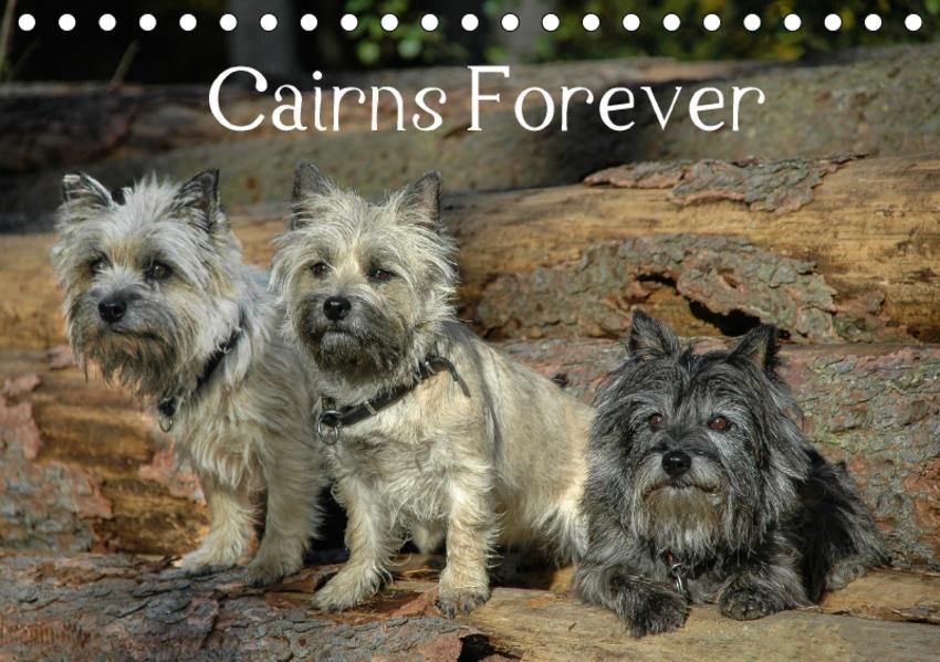Cairns Forever (Tischkalender 2017 DIN A5 quer) - Coverbild