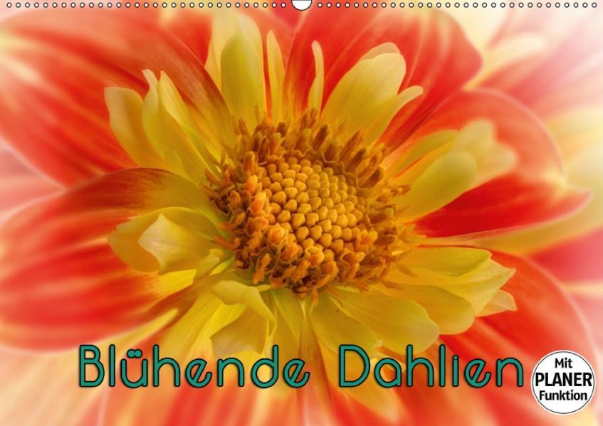 Blühende Dahlien (Wandkalender 2017 DIN A2 quer) - Coverbild