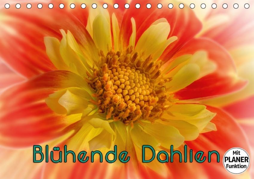 Blühende Dahlien (Tischkalender 2017 DIN A5 quer) - Coverbild