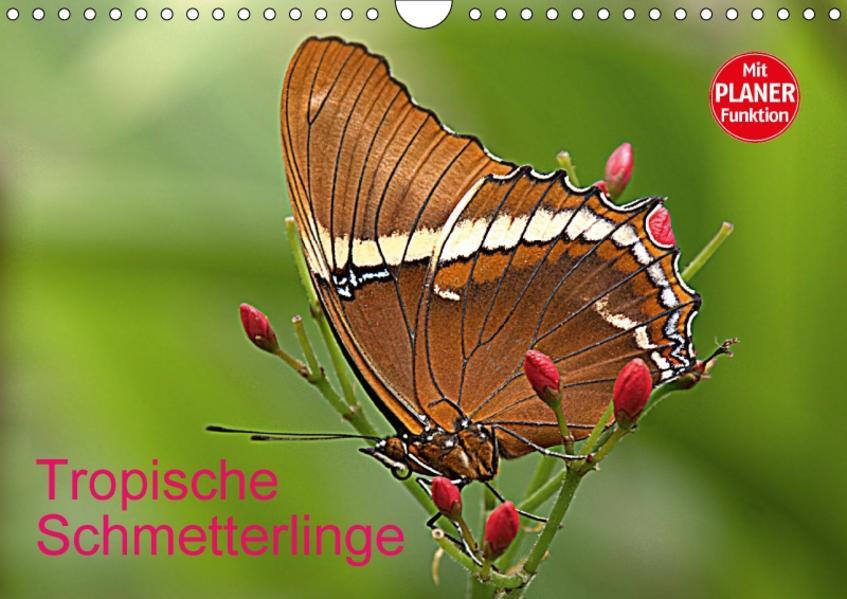 Tropische Schmetterlinge (Wandkalender 2017 DIN A4 quer) - Coverbild
