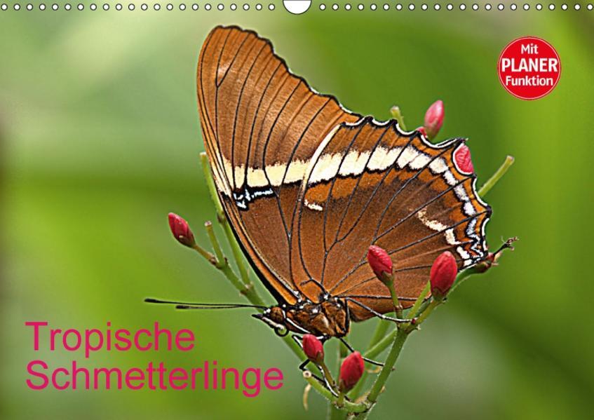 Tropische Schmetterlinge (Wandkalender 2017 DIN A3 quer) - Coverbild