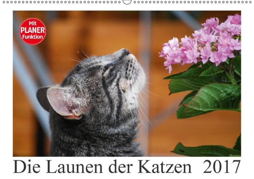 Die Launen der Katzen 2017 (Wandkalender 2017 DIN A2 quer) - Coverbild
