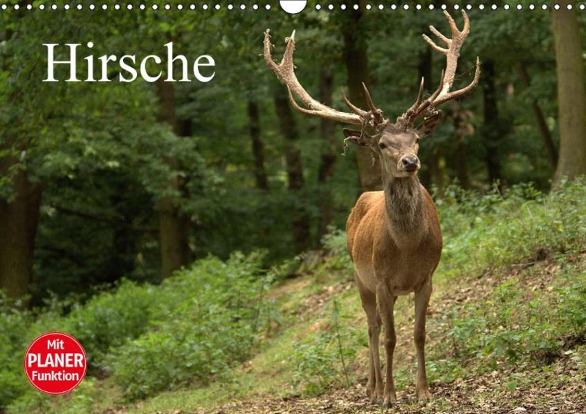 Hirsche (Wandkalender 2017 DIN A3 quer) - Coverbild