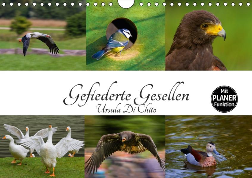 Gefiederte Gesellen (Wandkalender 2017 DIN A4 quer) - Coverbild