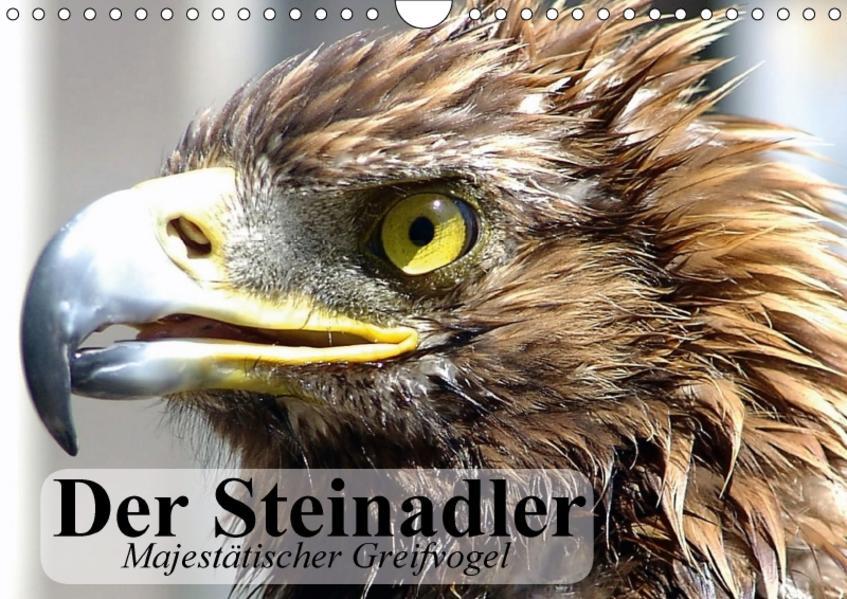 Der Steinadler. Majestätischer Greifvogel (Wandkalender 2017 DIN A4 quer) - Coverbild