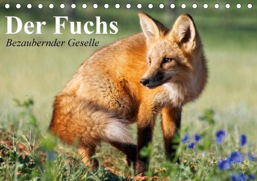Der Fuchs. Bezaubernder Geselle (Tischkalender 2017 DIN A5 quer) - Coverbild