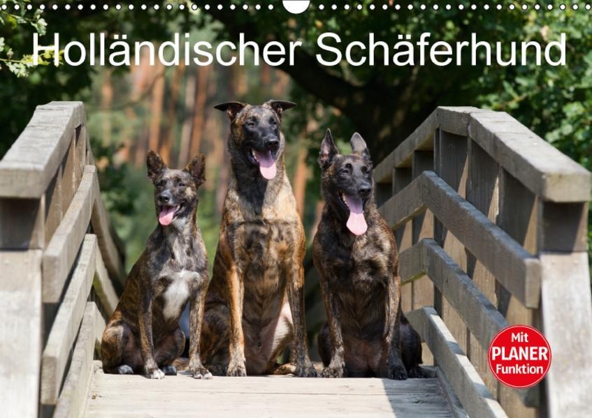 Holländischer Schäferhund (Wandkalender 2017 DIN A3 quer) - Coverbild