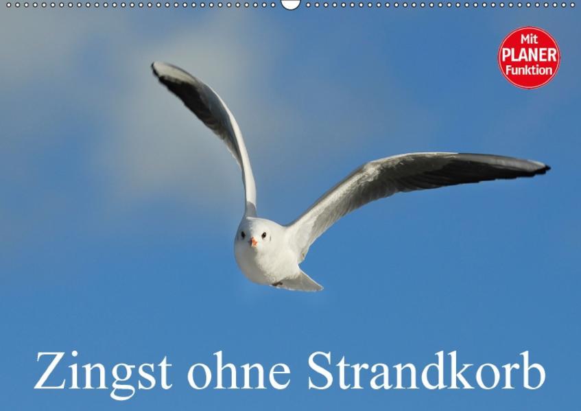Zingst ohne Strandkorb (Wandkalender 2017 DIN A2 quer) - Coverbild