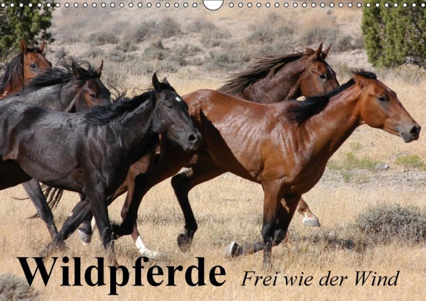 Wildpferde. Frei wie der Wind (Wandkalender 2017 DIN A3 quer) - Coverbild