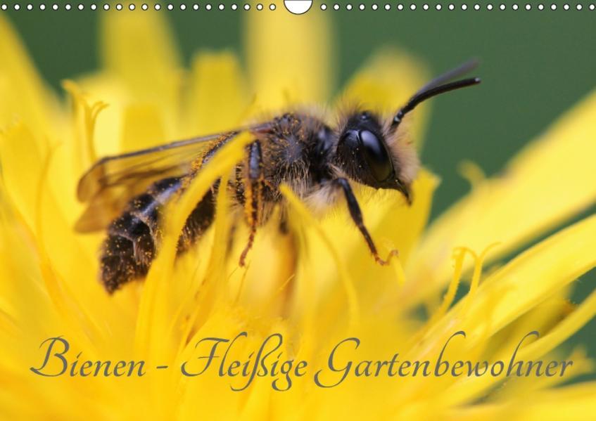 Bienen - Fleißige Gartenbewohner (Wandkalender 2017 DIN A3 quer) - Coverbild
