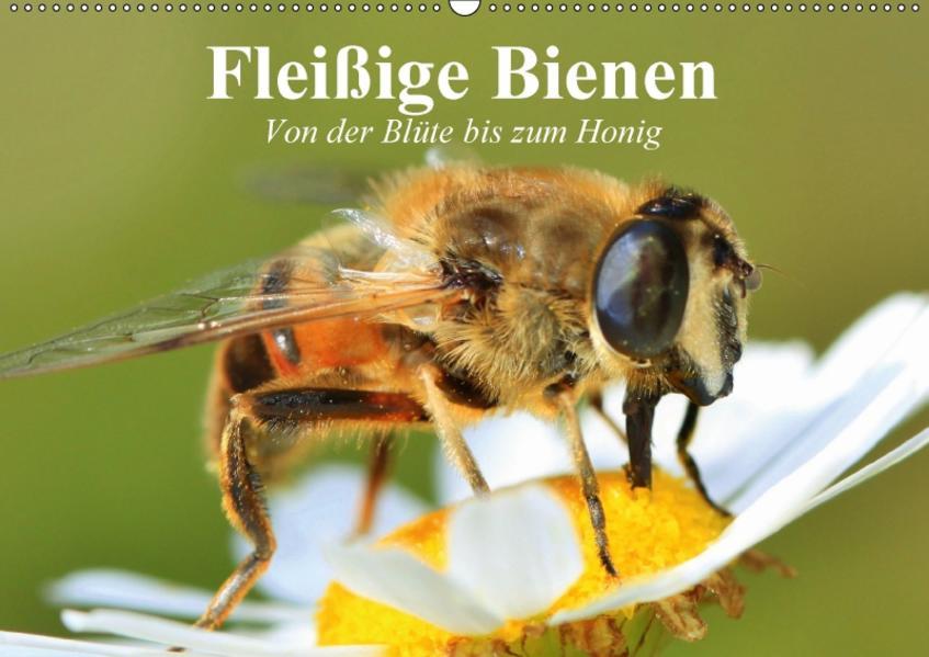 Fleißige Bienen. Von der Blüte bis zum Honig (Wandkalender 2017 DIN A2 quer) - Coverbild