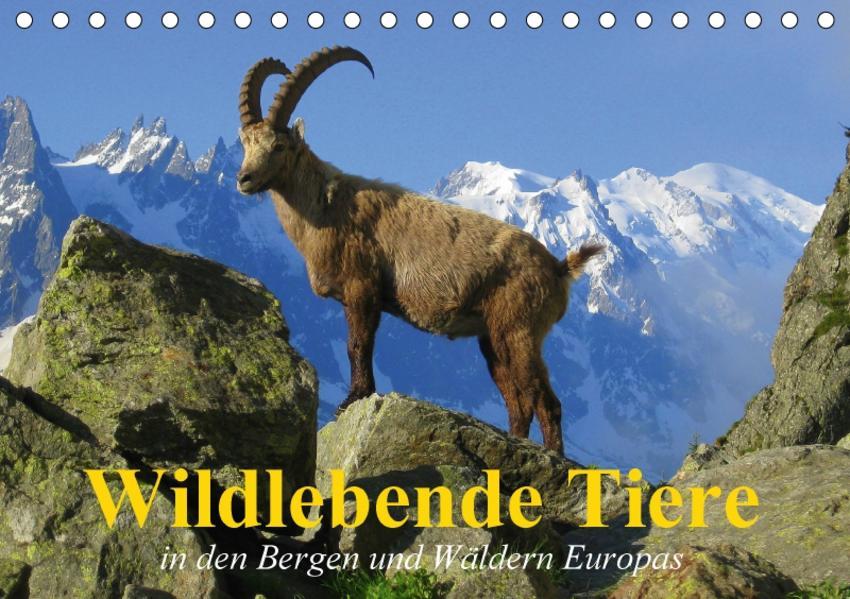 Wildlebende Tiere in den Bergen und Wäldern Europas (Tischkalender 2017 DIN A5 quer) - Coverbild