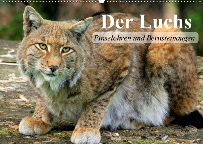 Der Luchs. Pinselohren und Bernsteinaugen (Wandkalender 2017 DIN A2 quer) - Coverbild