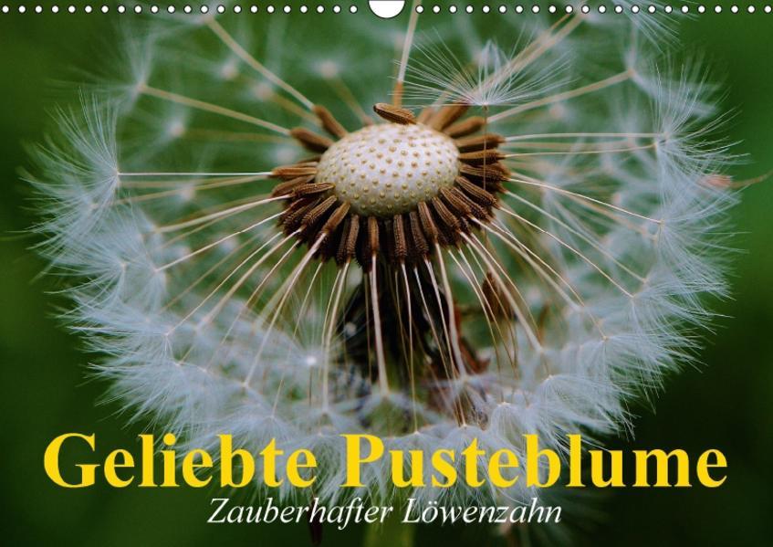 Geliebte Pusteblume. Zauberhafter Löwenzahn (Wandkalender 2017 DIN A3 quer) - Coverbild