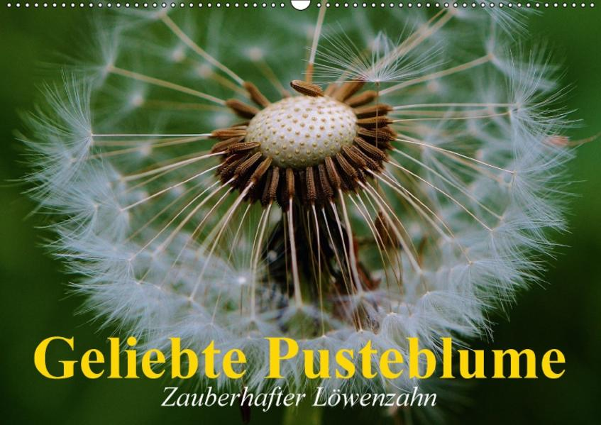 Geliebte Pusteblume. Zauberhafter Löwenzahn (Wandkalender 2017 DIN A2 quer) - Coverbild