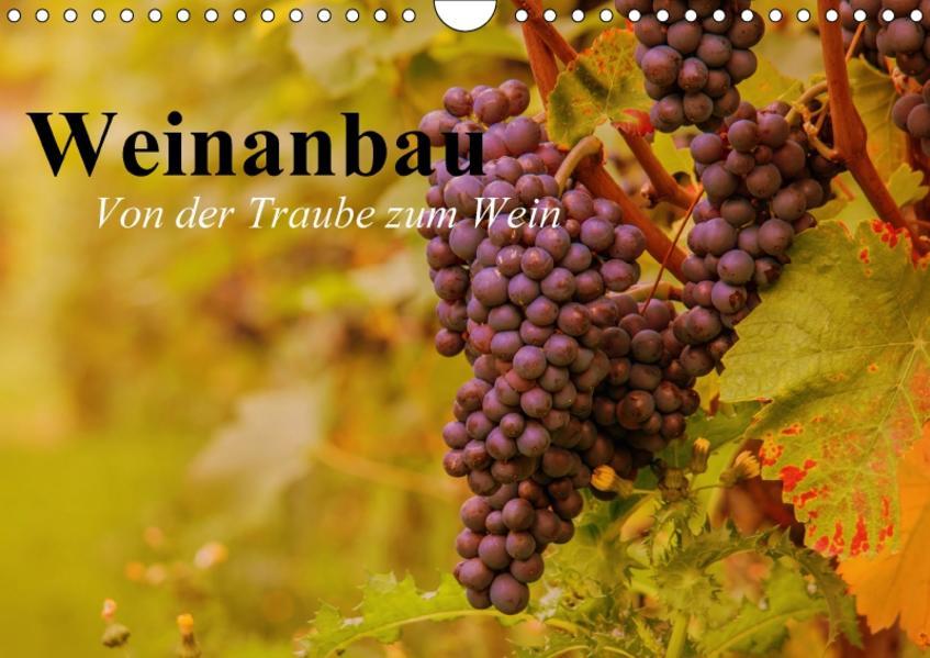 Weinanbau. Von der Traube zum Wein (Wandkalender 2017 DIN A4 quer) - Coverbild
