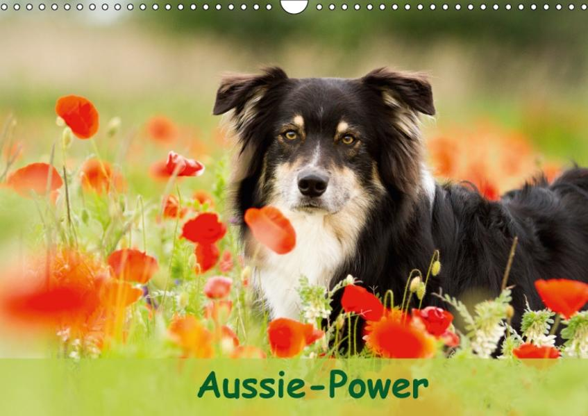Aussie-Power (Wandkalender 2017 DIN A3 quer) - Coverbild