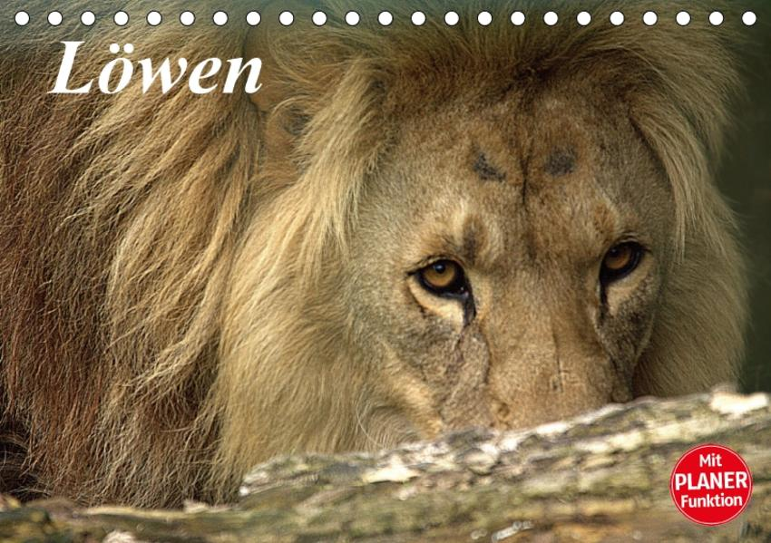 Löwen (Tischkalender 2017 DIN A5 quer) - Coverbild