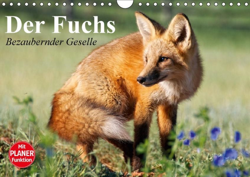 Der Fuchs. Bezaubernder Geselle (Wandkalender 2017 DIN A4 quer) - Coverbild