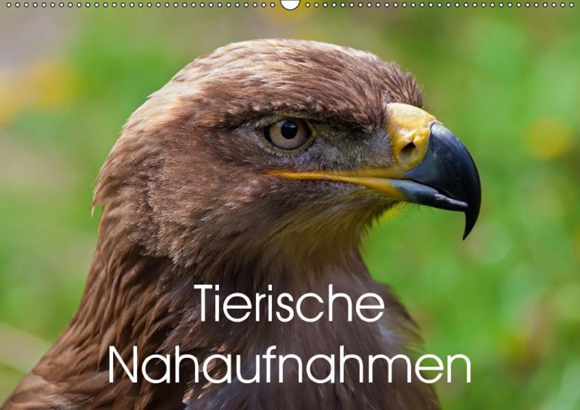 Tierische Nahaufnahmen (Wandkalender 2017 DIN A2 quer) - Coverbild