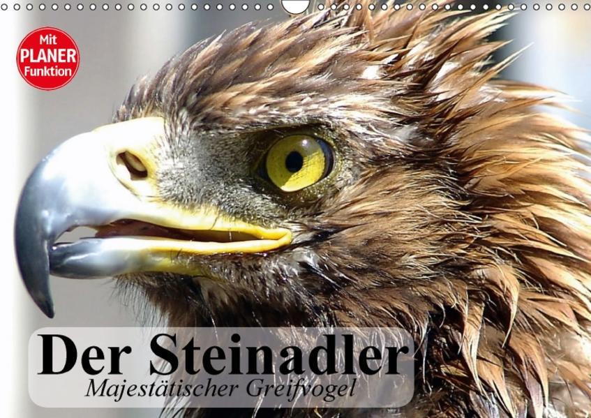 Der Steinadler. Majestätischer Greifvogel (Wandkalender 2017 DIN A3 quer) - Coverbild