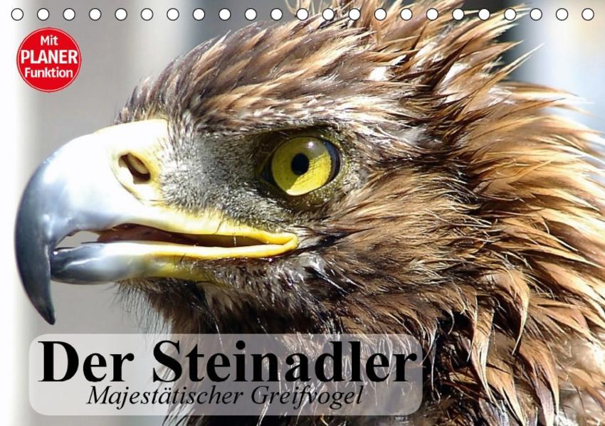 Der Steinadler. Majestätischer Greifvogel (Tischkalender 2017 DIN A5 quer) - Coverbild