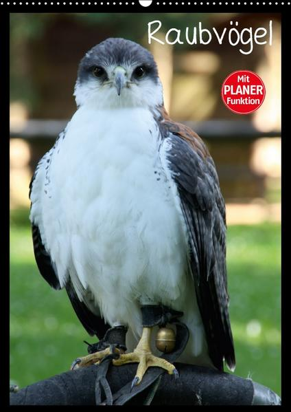 Raubvögel (Wandkalender 2017 DIN A2 hoch) - Coverbild