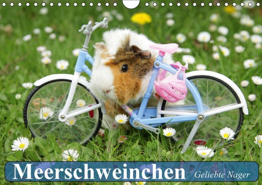 Meerschweinchen. Geliebte Nager (Wandkalender 2017 DIN A4 quer) - Coverbild
