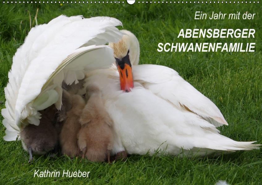 Ein Jahr mit der Abensberger Schwanenfamilie (Wandkalender 2017 DIN A2 quer) - Coverbild