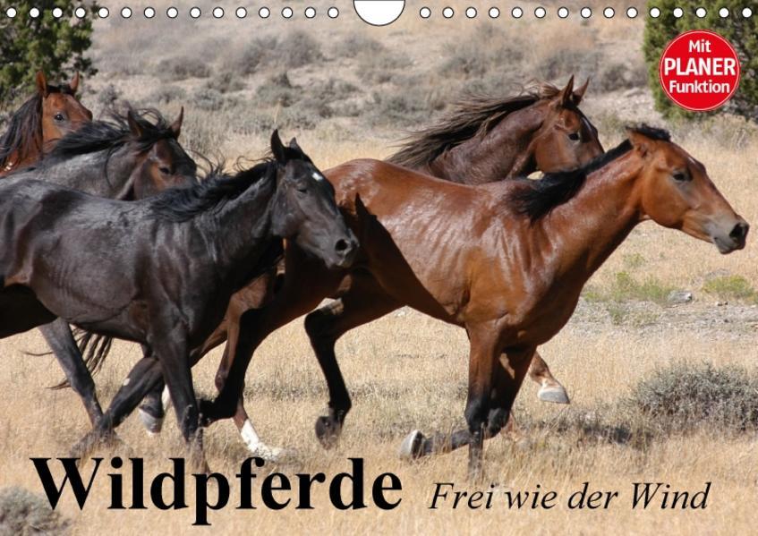 Wildpferde. Frei wie der Wind (Wandkalender 2017 DIN A4 quer) - Coverbild