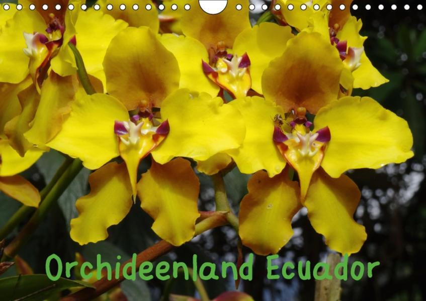 Orchideenland Ecuador (Wandkalender 2017 DIN A4 quer) - Coverbild