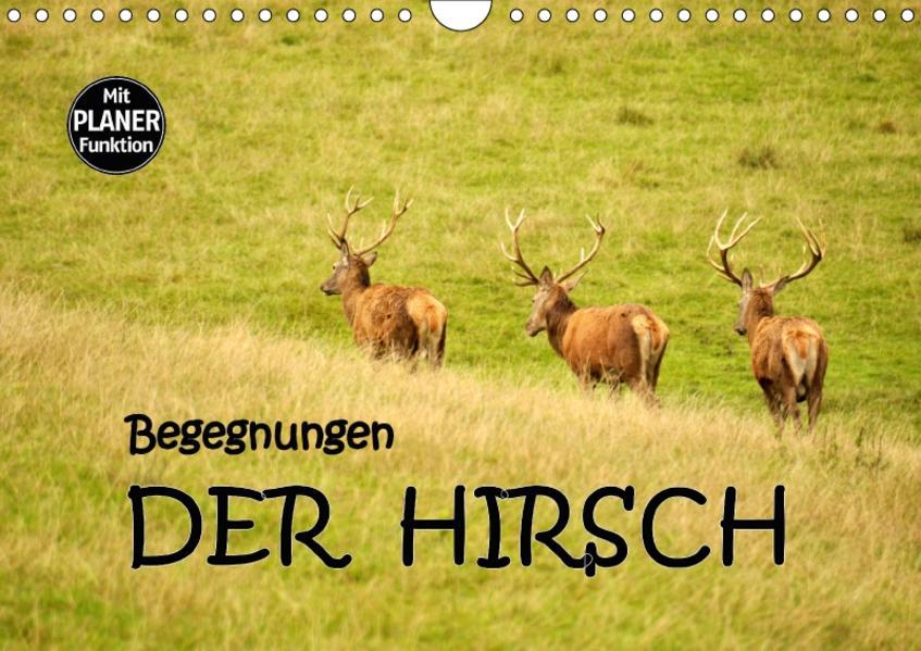 Begegnungen. DER HIRSCH (Wandkalender 2017 DIN A4 quer) - Coverbild