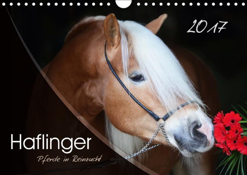 Haflinger-Pferde in Reinzucht (Wandkalender 2017 DIN A4 quer) - Coverbild