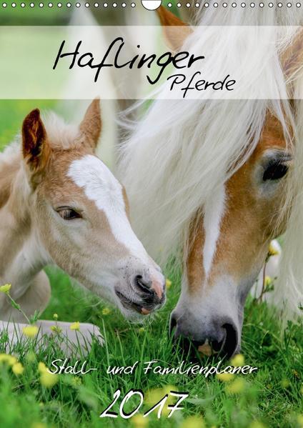 Haflinger Pferde - Stall- und Familienplaner 2017 (Wandkalender 2017 DIN A3 hoch) - Coverbild
