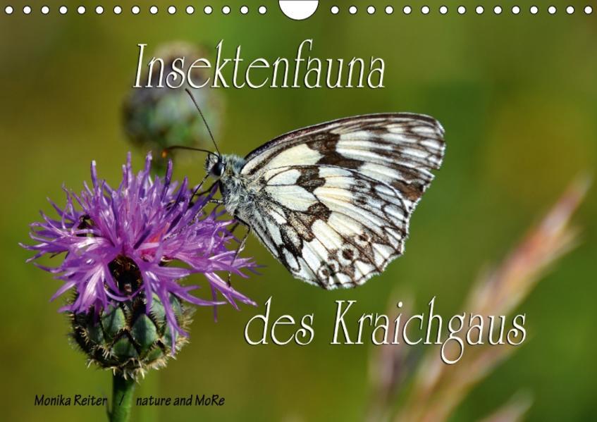 Insektenfauna des Kraichgaus (Wandkalender 2017 DIN A4 quer) - Coverbild
