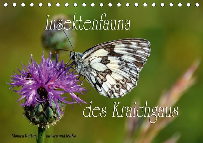 Insektenfauna des Kraichgaus (Tischkalender 2017 DIN A5 quer) - Coverbild