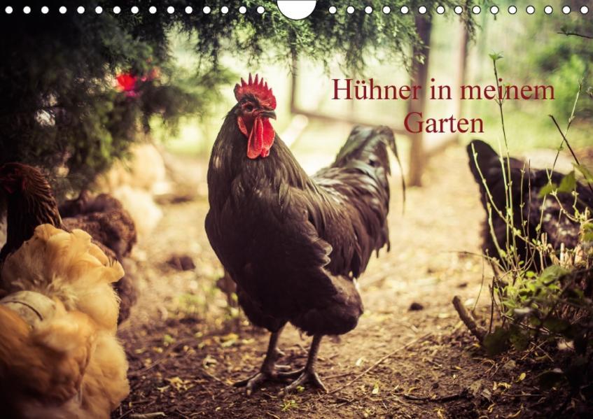 Hühner in meinem Garten (Wandkalender 2017 DIN A4 quer) - Coverbild