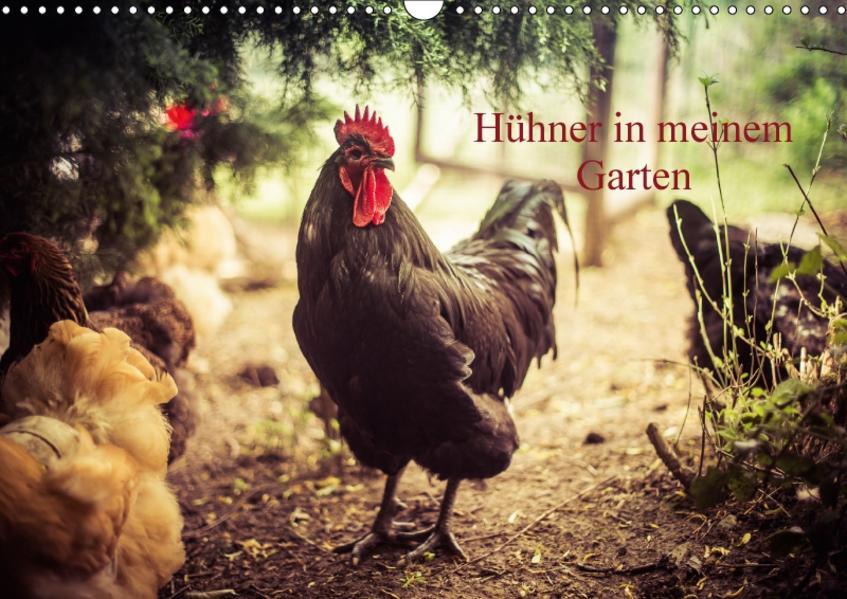 Hühner in meinem Garten (Wandkalender 2017 DIN A3 quer) - Coverbild